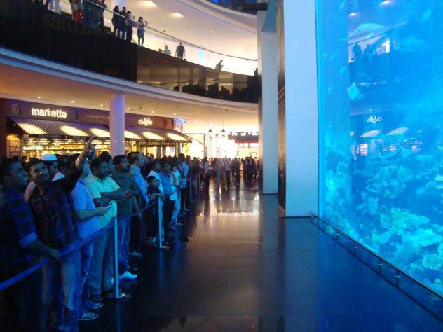 Dubai Aquarium free