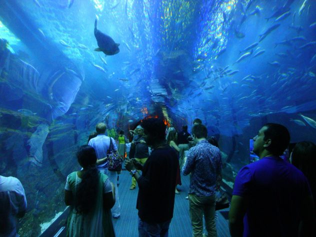 Aquarium Tunnel in Dubai