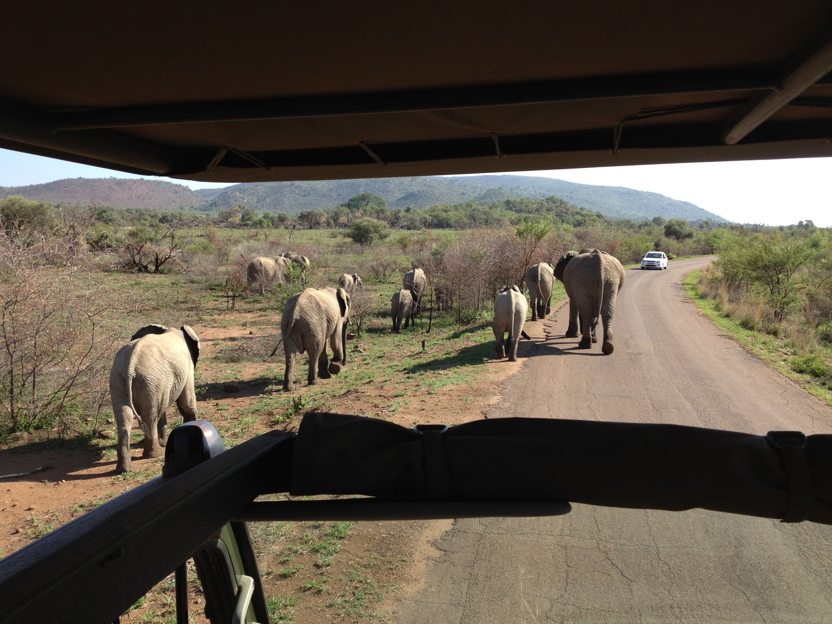 slony na ceste