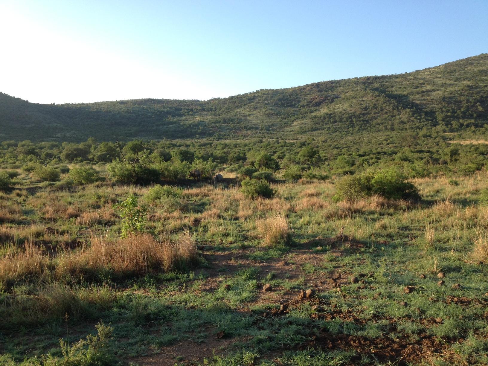 pilanesberg_safari
