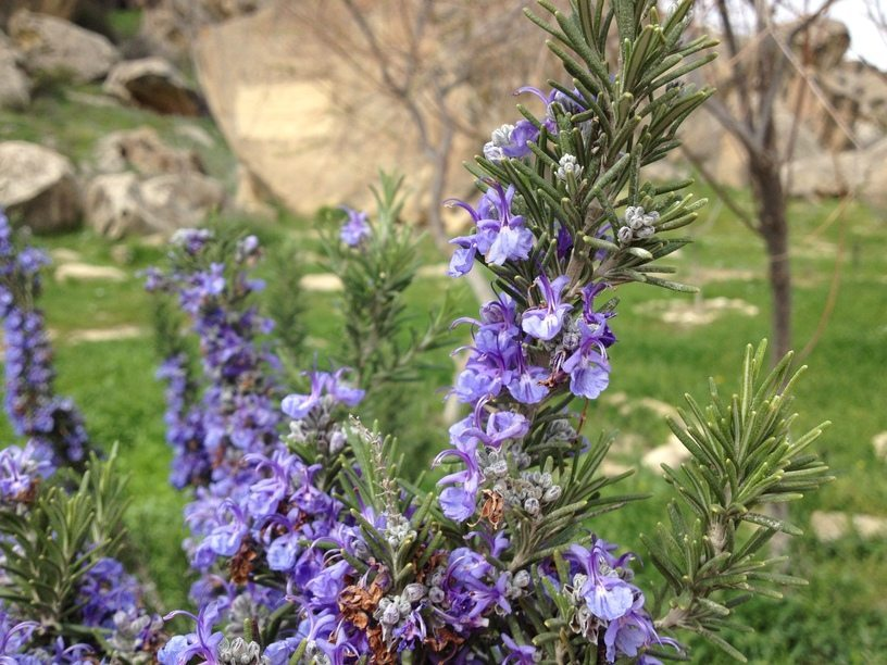 priroda_v_azerbajdzane