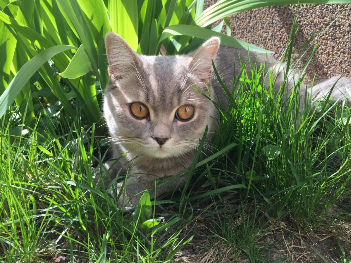 macka-v-zahrade