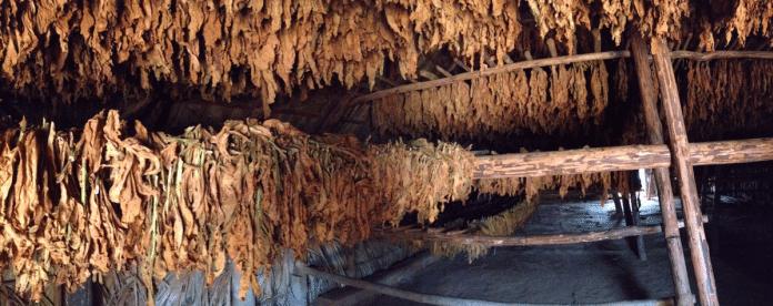 Tabaková farma, z ktorej som si doniesol semienka