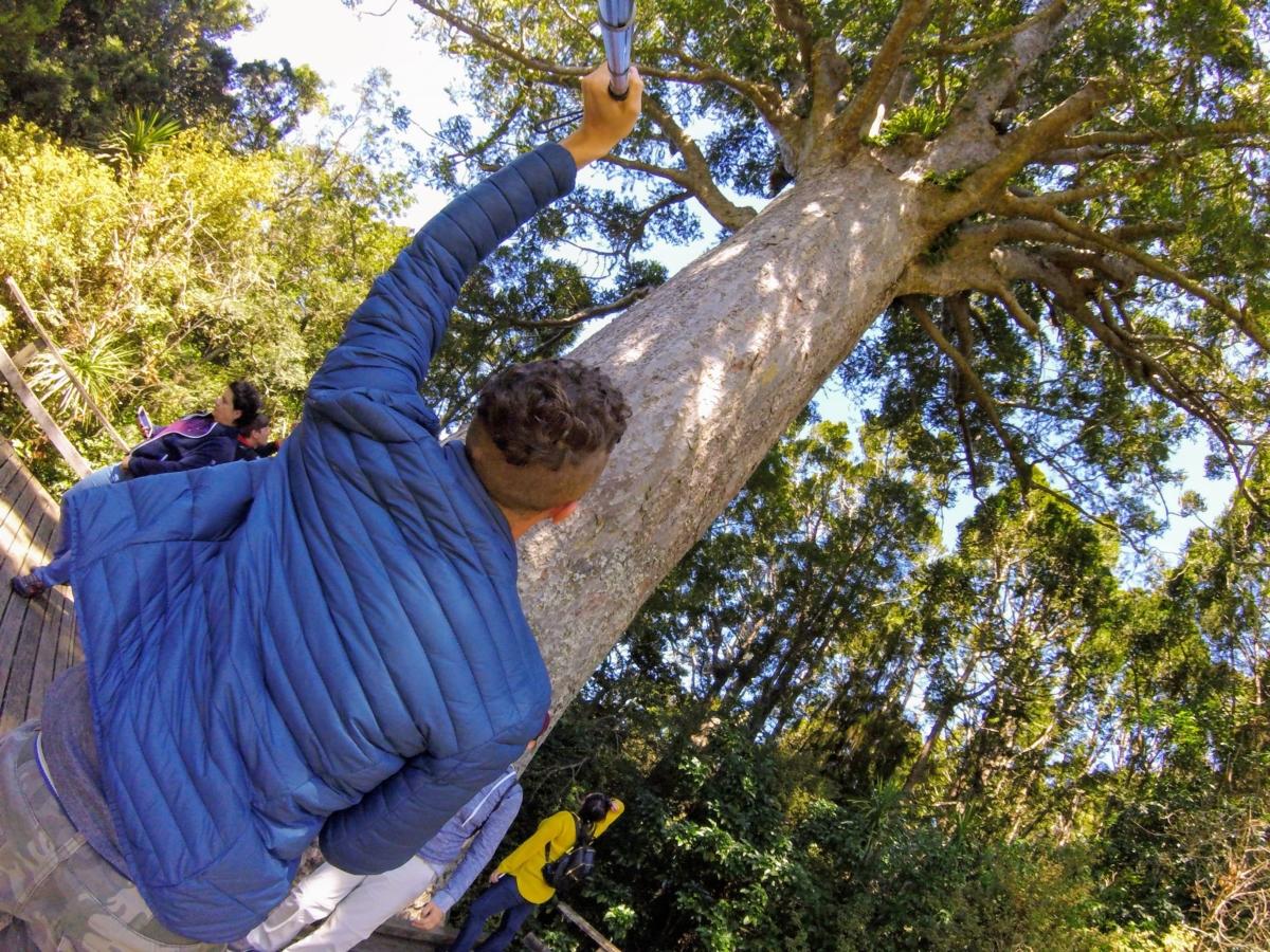 mauri forest novy zeland