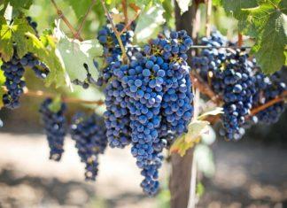 novozélandské vína