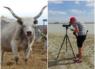 safari v rakúsku