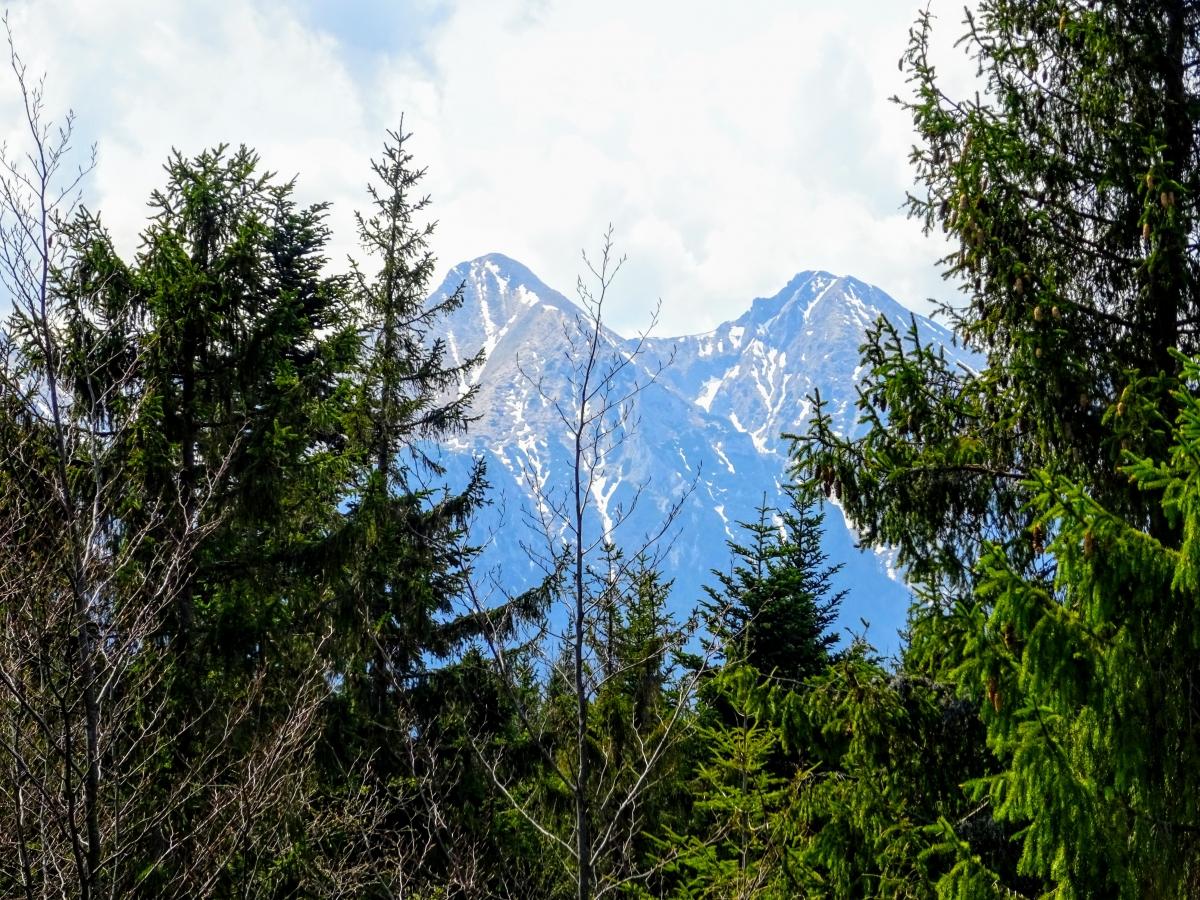 chodník korunami stromov návšteva