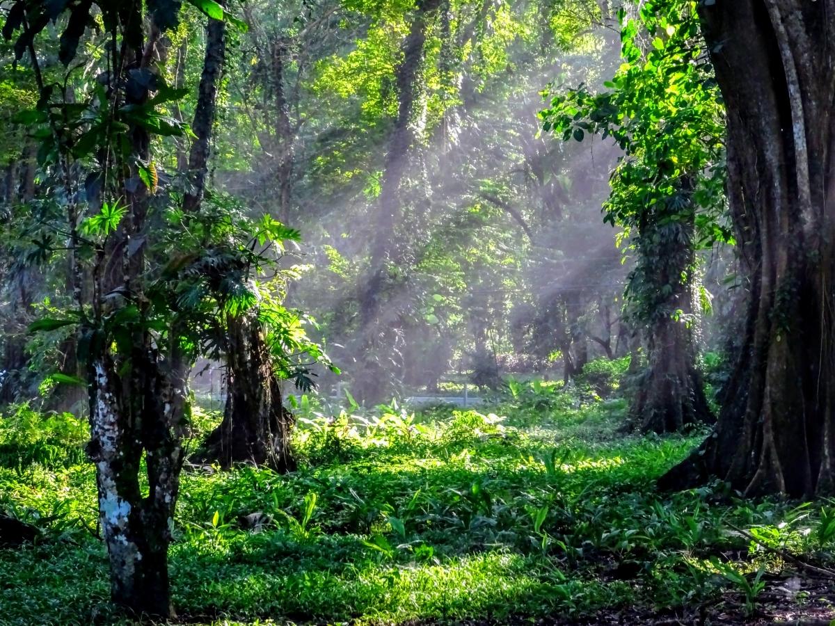Džungľa v Kostarike