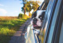 Ako vybaviť pas pre psa a mačku