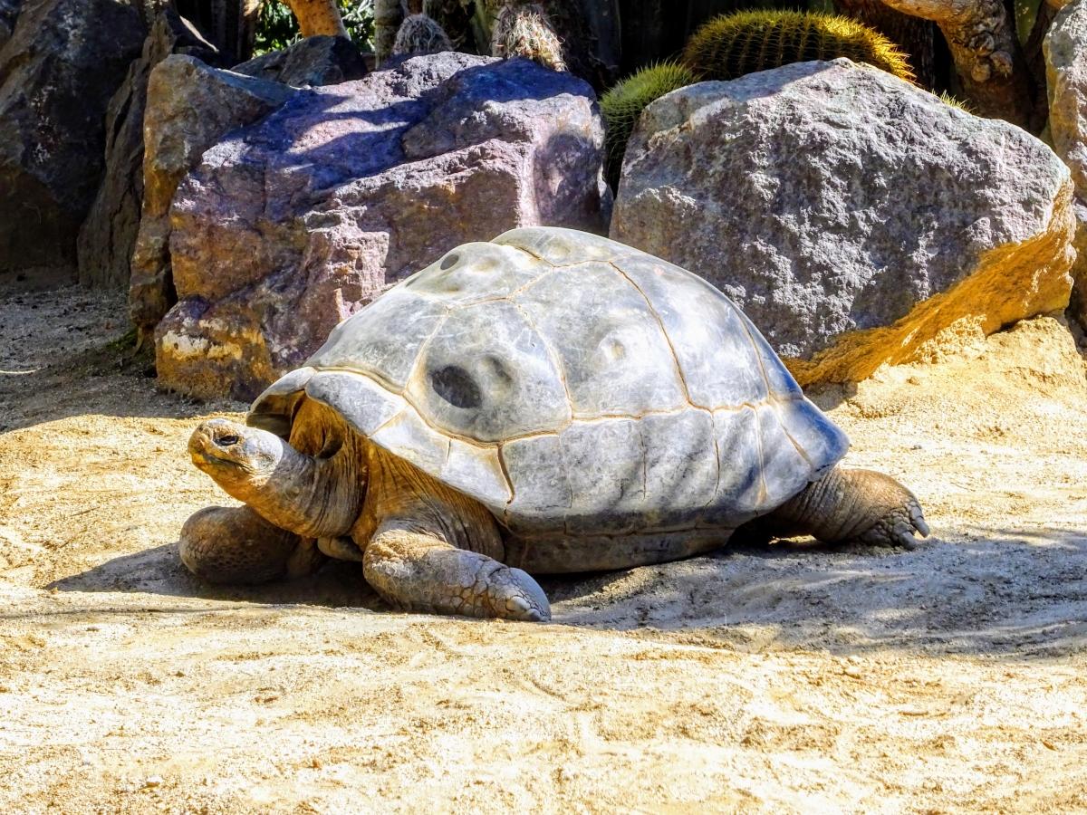 zoo v san diegu