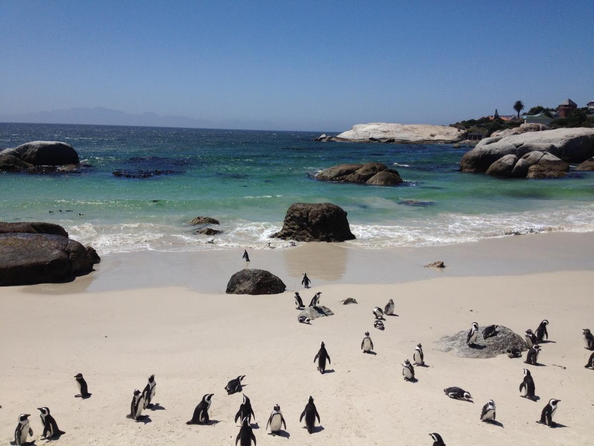 tučniaky v juhoafrickej republike