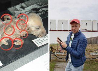 Mutácie na zvieratách v Černobyle