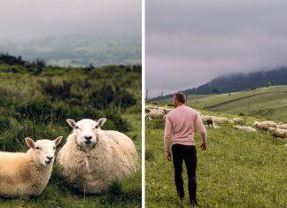 Ako sa vyrába bryndza na Slovensku a všetko, čo o bryndzi musíte vedieť