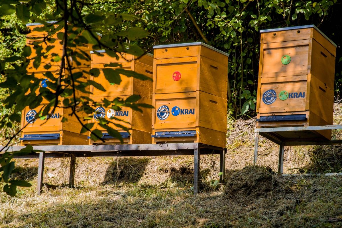 Ako chovať včely a prečo robia med? V zime nespia & sem chodia na WC