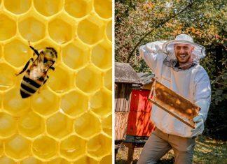 ako chovať včely
