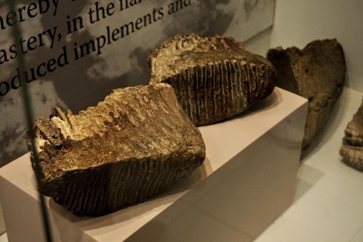 mamutie kosti v trenčianskom hrade