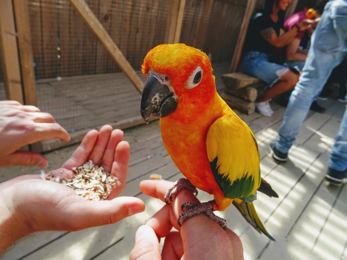 Nakŕmiť môžete v ZOO kontakt aj papagáje.