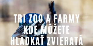 3 zoologické záhrady a farmy na Slovensku, kde možno pohladkať zvieratá.