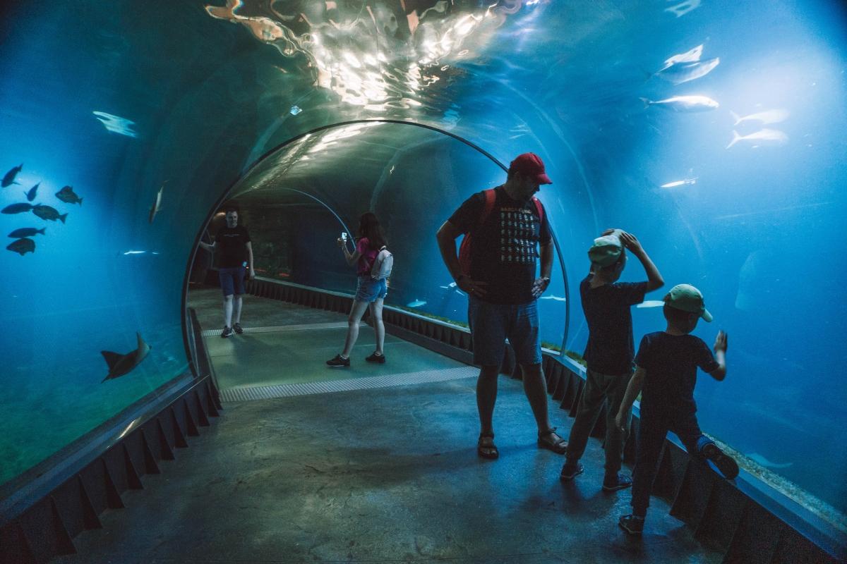 Tunel cez akvárium vo ZOO v Vroclave