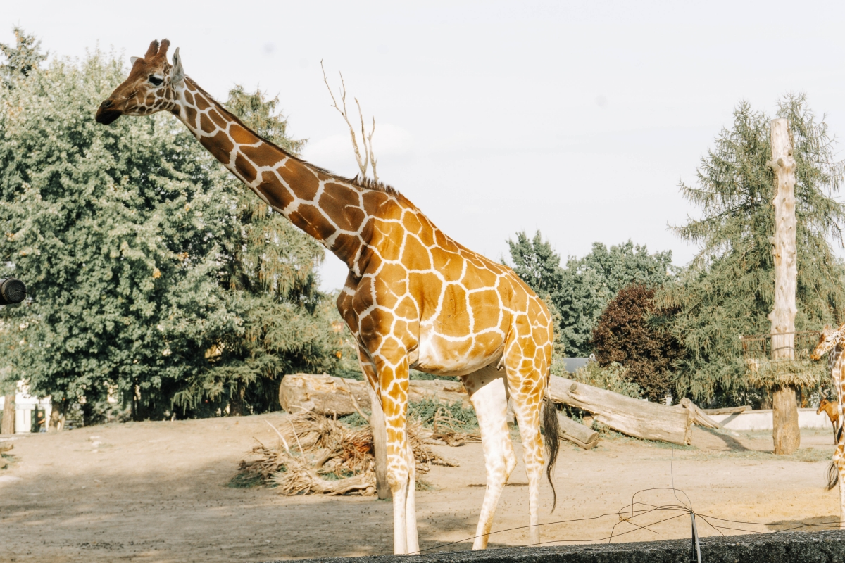 Vroslavská zoo